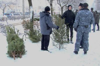 Міліція полює на ялинкових браконьєрів