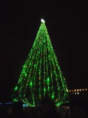 Главная ель Житомира может угаснуть до Нового Года