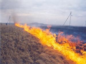 Влада попереджає: скоро почне горіти суха трава!