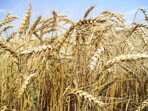 Аграрії області вже отримали авансом 12,6 млн. грн.