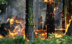 """Житомирян просять не палити ліси на """"майовках"""""""