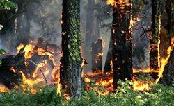 За квітень в Україні вже згоріло 74 гектари лісів