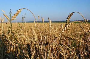 Система аграрної освіти в Україні потребує якісного реформування