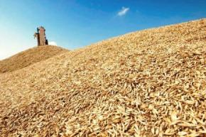 Аграрний фонд закупив 860 тис. тонн зерна нового врожаю