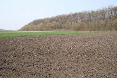 Житомирские крестьяне попросили Президента защитить их земельные паи