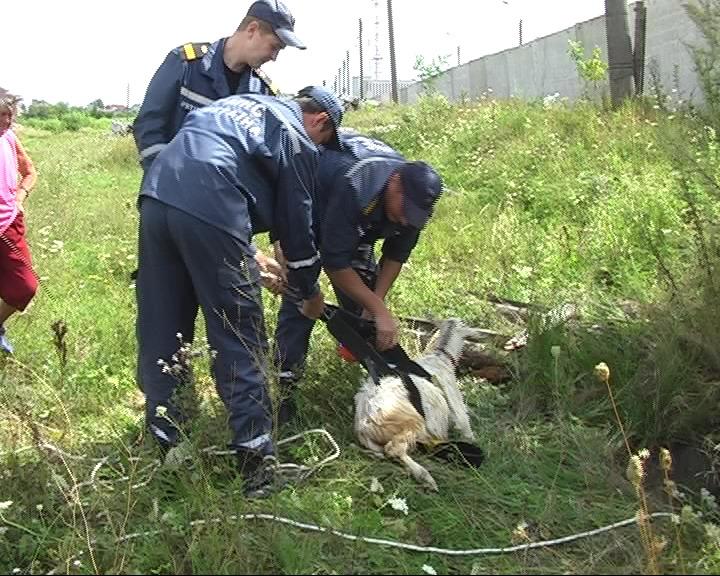 Житомирські МНСники врятували козу