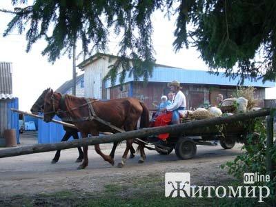 В селі Гродське пройде конкурс серед господарів на найбільші вирощені овочі-гіганти