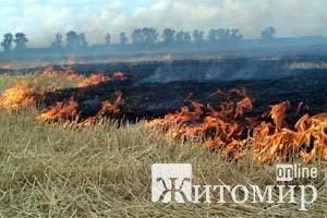 На Житомирщині горять поля та торфяники
