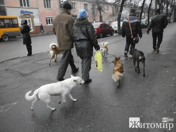 Зграя собак тероризує сквер біля собора. ФОТО