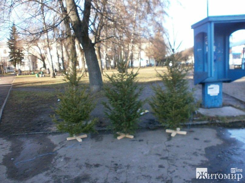 В Житомирі почався продаж новорічних ялинок. ФОТО