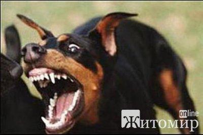 В Житомире бродячие собаки взялись за чиновников