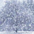 На День Святого Валентина в Житомирі йтиме сніг