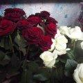 Як закохані житомиряни купують квіти. ФОТО
