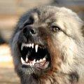 На Житомирщині собаки тероризують селян