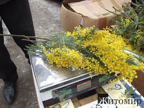 Скільки в Житомирі коштує букет до 8-го березня? ФОТО