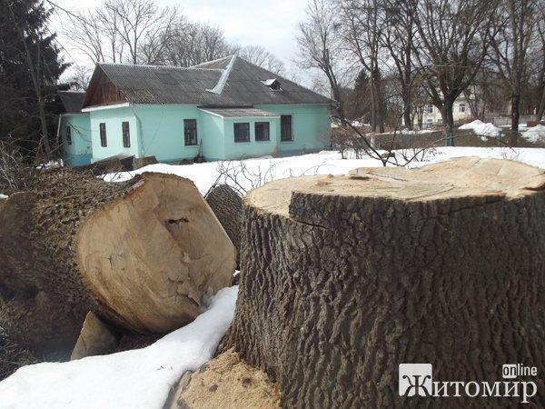 В парку зрізали дерева. ФОТО