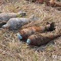 В Житомирі знайшли снаряди часів другої світової