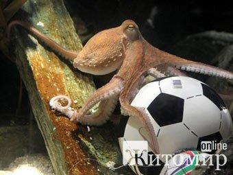 Житомирський кнур – оракул Євро 2012. ФОТО