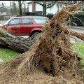 Смерч зривав шифер та виривав із корінням дерева на очах у переляканих селян ВІДЕО