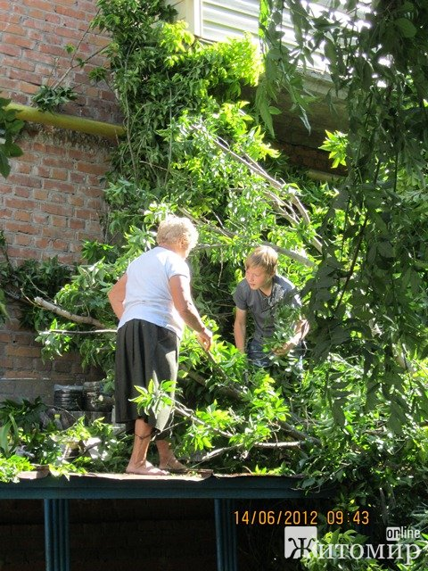 У Житомирі на будинок впало дерево. ФОТО