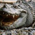 Триметровий алігатор відкусив підлітку руку