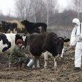Чорнобиль закритий для життя на тисячу років. ВІДЕО