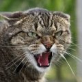 Скажена кішка погризла 85-річну пенсіонерку на Миколаївщині