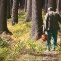 В лесах Житомирщины пачками исчезают грибники