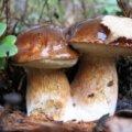 У густому лісі Житомирщини знайшли тіло одного із зниклих грибників