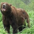 Розлючений ведмідь розірвав пенсіонера в Карпатах