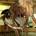 В Житомирі скелет мамонта знайшли... під церквою!