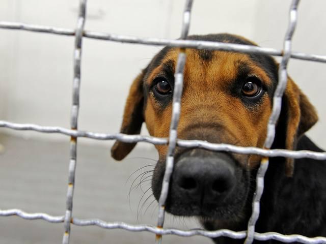 Безпритульні собаки в Житомирі: що робитиме влада?
