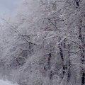 Завтра у Житомирі йтиме сніг