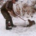 Відважний порятунок дикої рисі з капкану став хітом на YouTube. ВІДЕО
