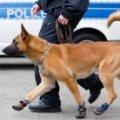 Прокуратура змусила поліцейського собаку написати рапорт про затримання. ФОТО