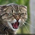 В Олевському районі скажений кіт покусав родину