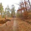 Участника велогонки сбил олень. ВИДЕО