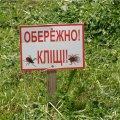 Зголоднілі кліщі кидаються на українців з дерев і кущів та чують кров за 1,5 км