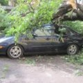 В Житомирській області через негоду знеструмлено 23 населених пунктів