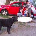 Собака Масяня, яка жила у закритому колекторі 4 місяці, вийшла на волю