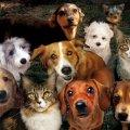 Житомирян просять інформувати про скупчення безпритульних тварин для їх подальшого відлову та кастрації