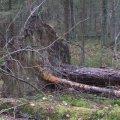 В Житомирской области дерево убило мужчину