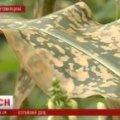 На Житомирщині села залили отрутою з літака: городина вкрилася жовтими плямами і погоріла. ВІДЕО