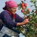 Польща страждає від браку українських заробітчан