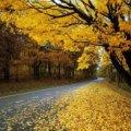 Синоптики розповіли про те, якою буде осінь