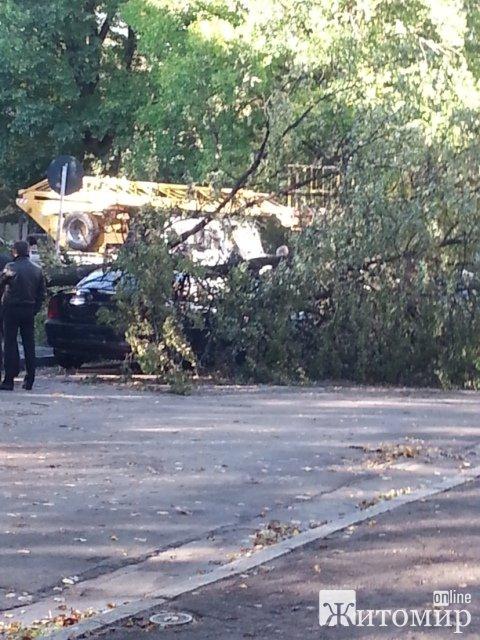 В Житомирі дерево понівечило авто. ФОТО