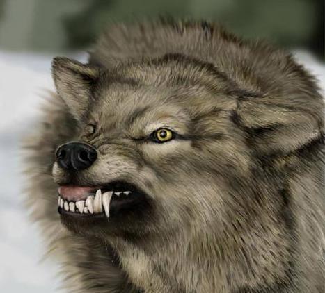 Волк напал на двух женщин в Житомирской области