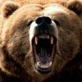Ведмідь мало не відгриз чоловікові голову в Карпатах