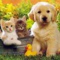 Рада заборонила бити і гнобити домашніх тварин
