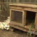 У Бердичеві чупакабра стрибнула через 2-метровий паркан заради кролячої крові